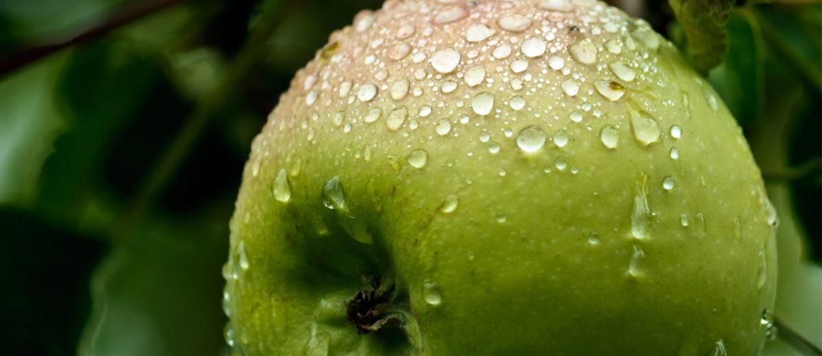Apfel_Regen