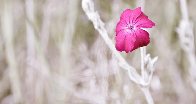 gute Laune Blume