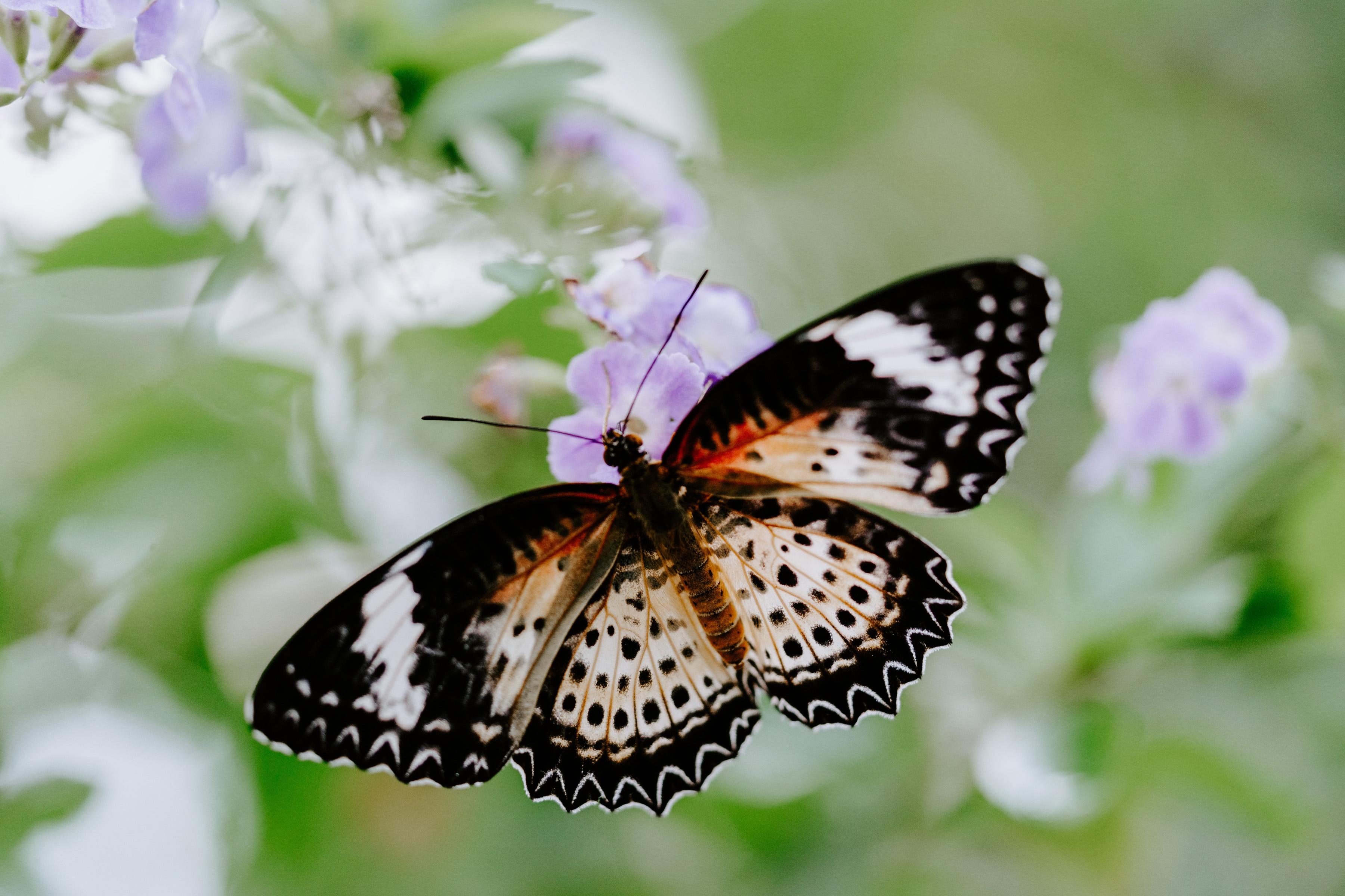 Bedeutet schmetterling was Krafttier Schmetterling